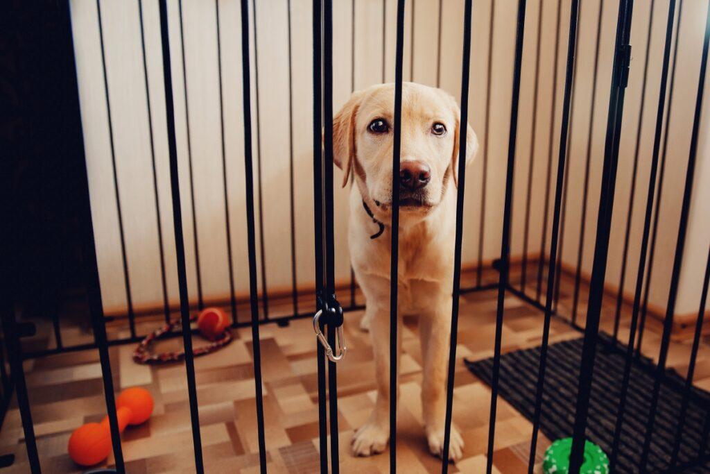 pas u kavezu