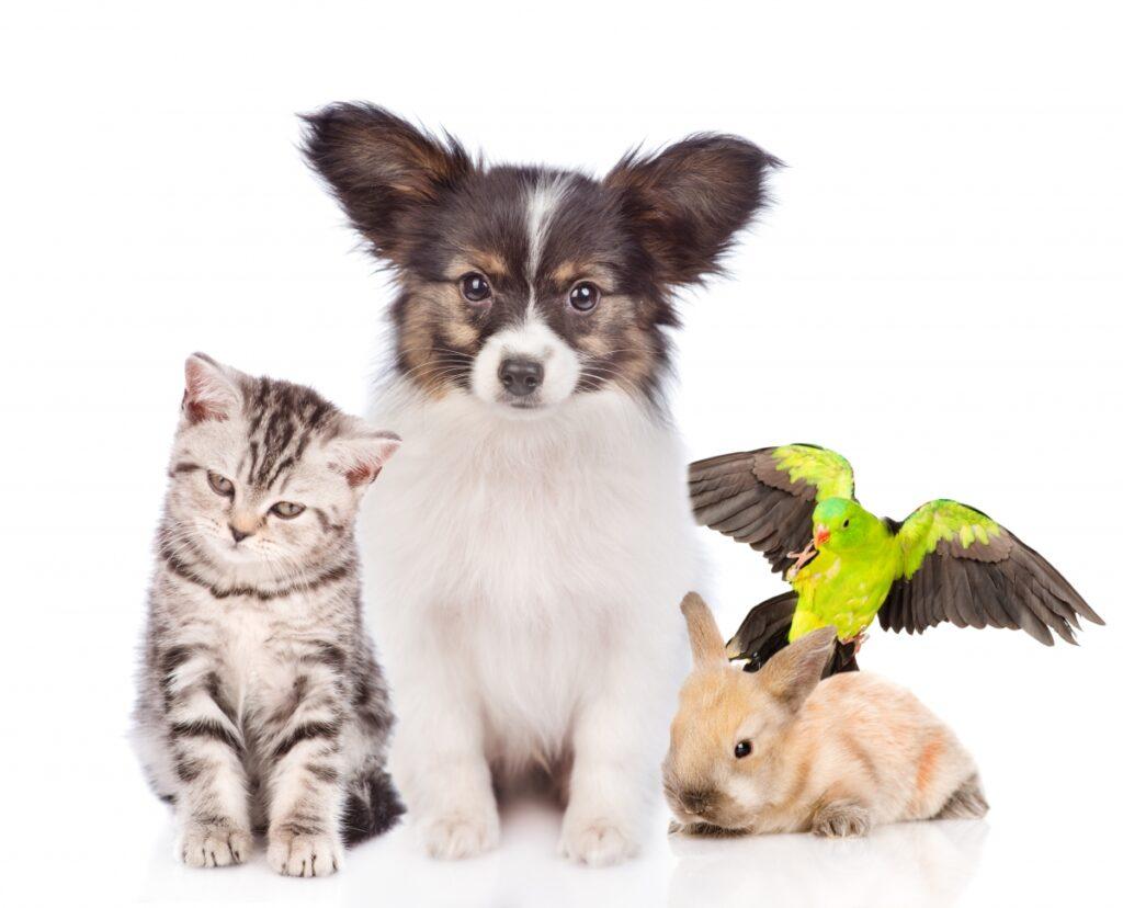 pas, mačka, zec
