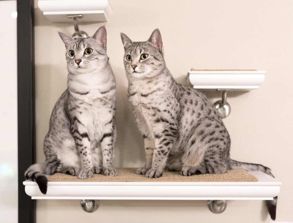 dve mačke