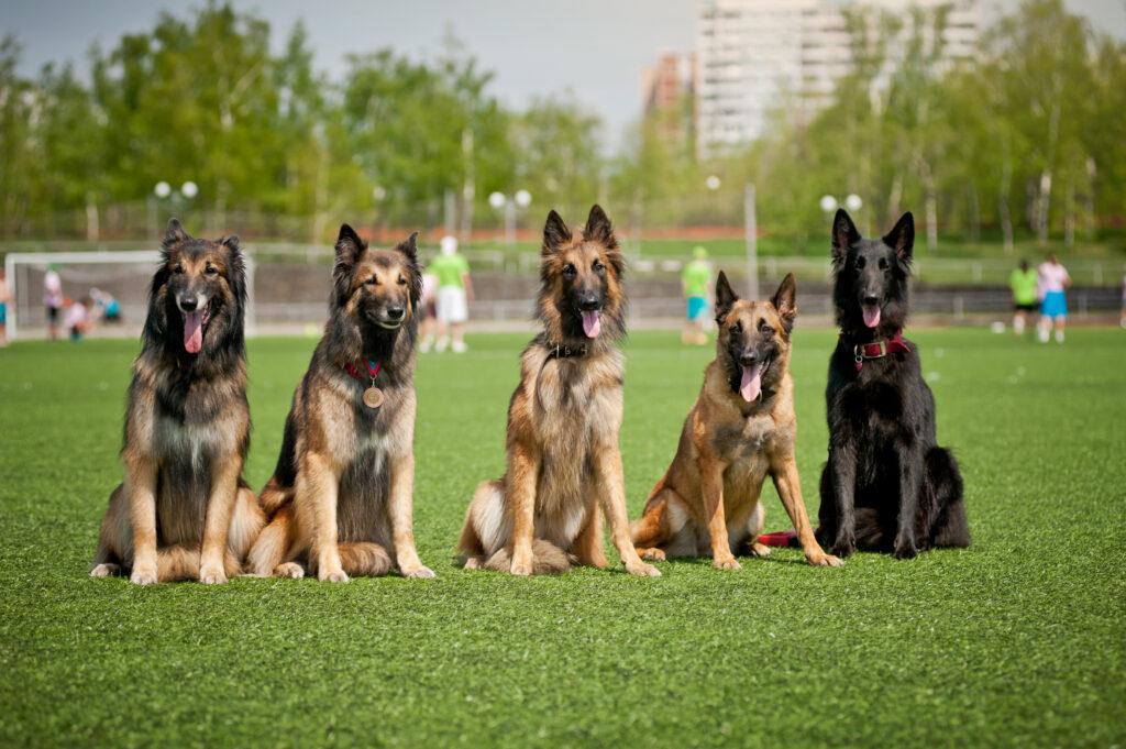 obuka psa