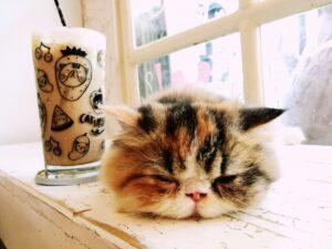 mačka i kafa
