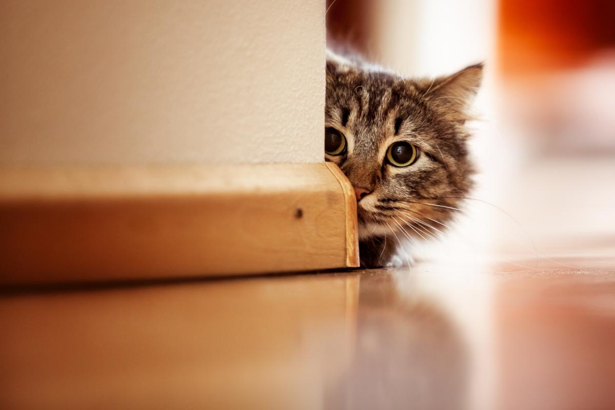 mačka se sakriva