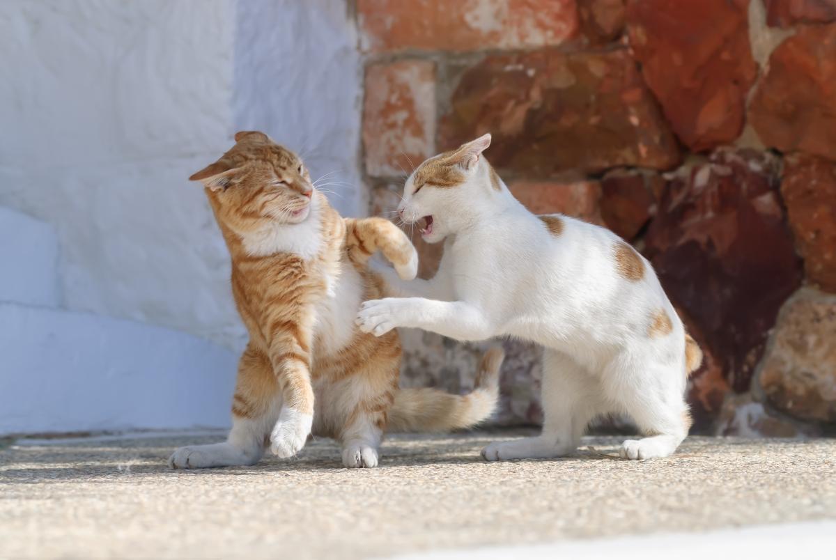 dve mačke na ulici