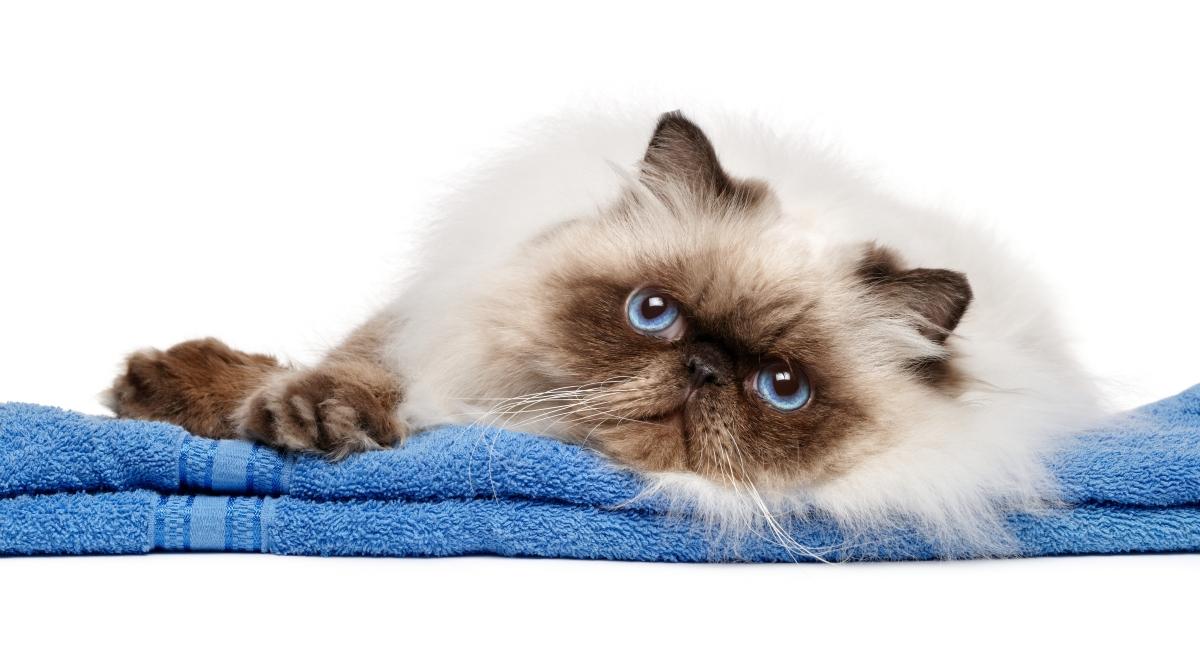 mačka leži