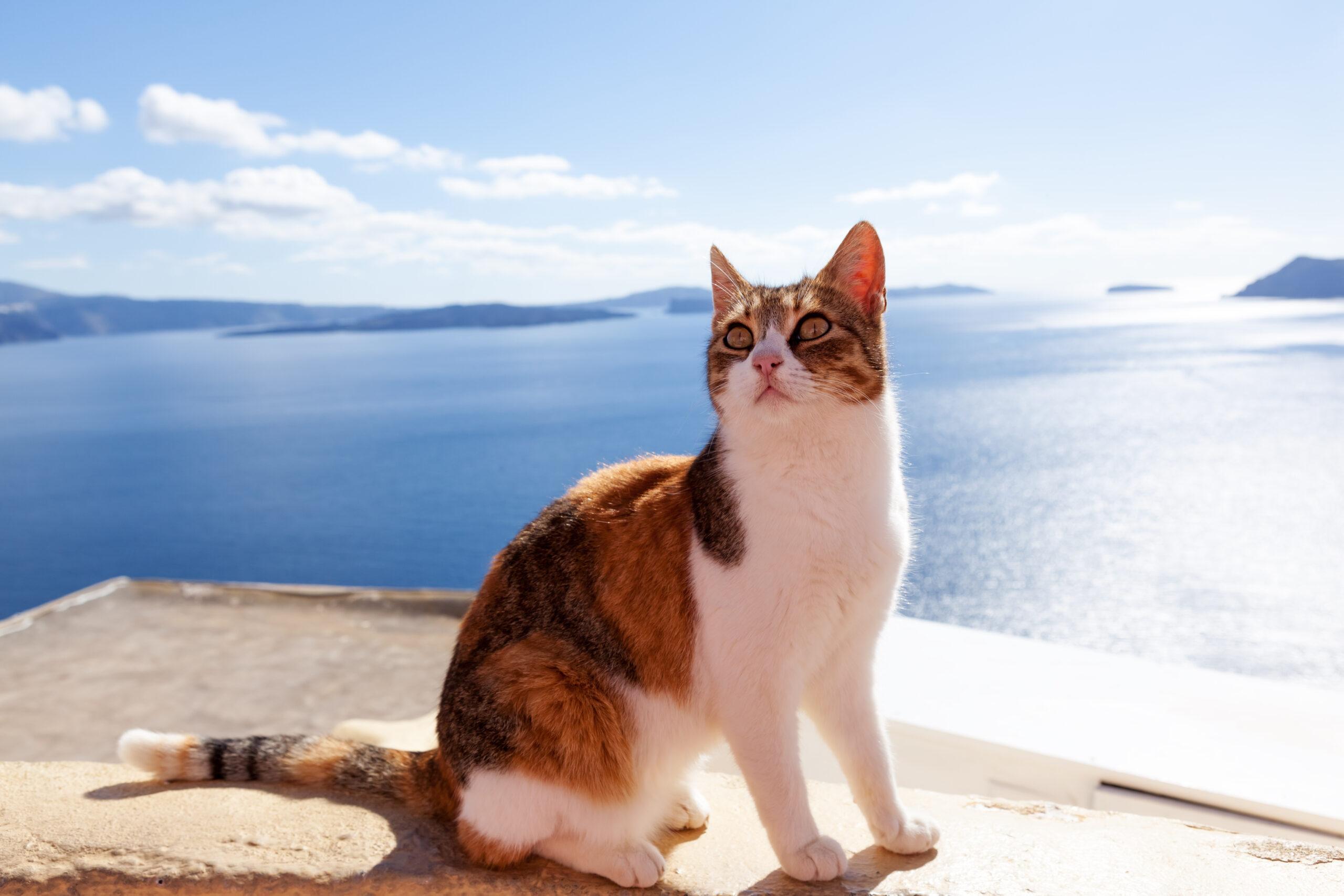 mačka na moru