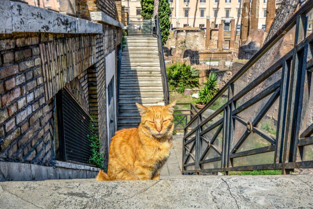 mačka na stepeništu